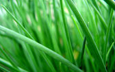 Fresh summer grass — Stock Photo