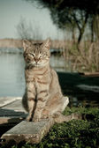 Cat No 3 — Stock Photo