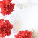 Red carnation flowers corner — Stock Photo
