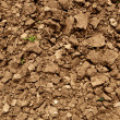 Dirt ground fresh plowed texture — Stock Photo #3165762
