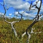 Dry tree — Stock Photo #2716678