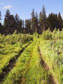 Summer grass road — Stock Photo