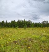 Summer cloudy meadow — Stock Photo