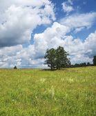Summer meadow — Stock Photo