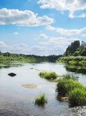 The river with green grass small islands — Stock Photo