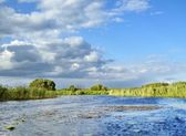Marsh river — Stock Photo