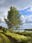 Birch on the river coast — Stock Photo