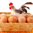 Easter basket  with eggs and  cock - Stock Photo