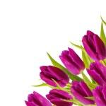 Purple tulips frame — Stock Photo