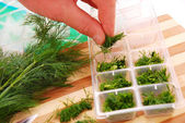 Freezing the dill for winter — Stock Photo