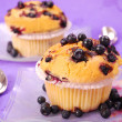 Blueberry muffins — Stock Photo #2787923