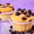 Blueberry muffins — Stock Photo #2827815