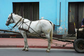 Horse drawing the cart — Stock Photo