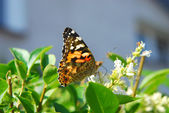 Butterfly-painted lady (vanessa cardui ) — Stock Photo