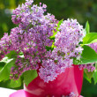 Stock Photo: Bunch of lilac in vase