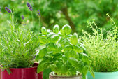 Home herb`s garden — Stockfoto