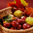 Stock Photo: Autumn chestnuts and leaves