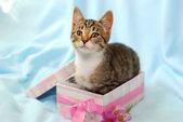 Котенок в подарочной коробке — Стоковое фото