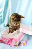 Kitten in gift box — Stock Photo