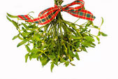 Bunch of mistletoe — 图库照片