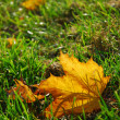Autumn leaf in grass — Stock Photo