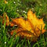 Autumn leaf in grass — Stock Photo