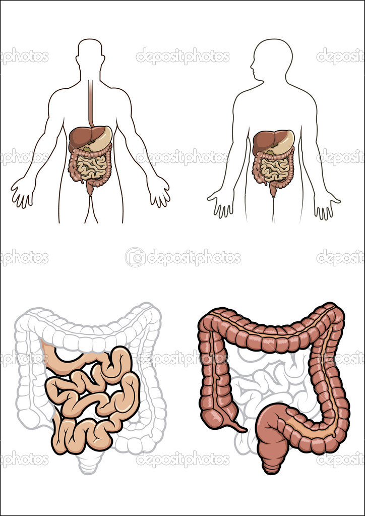 Diargram showing the human digestive system in vector — ベクター素材ストック #2868909