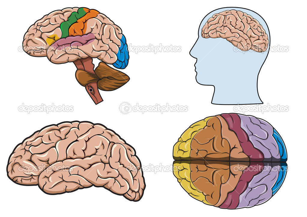 Diagram of a human brain in vector — Stock Vector #2967226