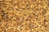 Closeup Nature Insect Larva — Stock Photo