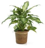 Ornamental Plants — Stock Photo