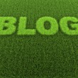 Stock Photo: Grass Blog
