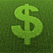 Grass Dollar Sign — Stock Photo