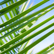 Palms leafs — Stock Photo
