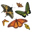 Different realistic butterflies — Stock Vector