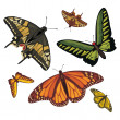 图库矢量图片: Different realistic butterflies
