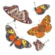 Stock Vector: Different realistic butterflies