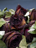 Old dried red roses against a dark backg — Stockfoto