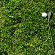 Golf club and ball in the rough — Stock Photo #2801524