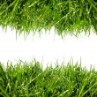 Green grass border — Stock Photo