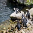Group of penguins playing — Stock Photo #2805786