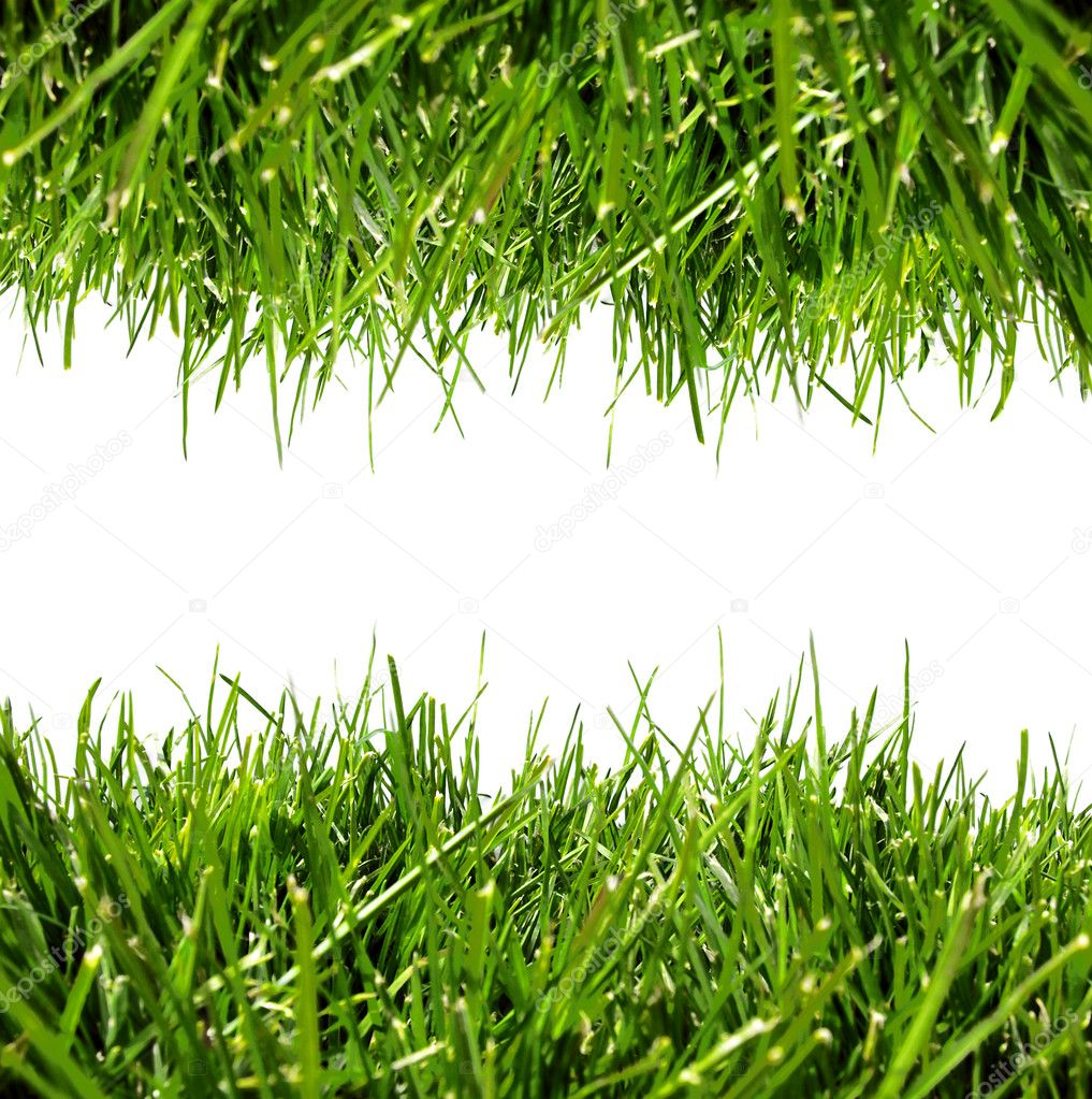 how to turn your grass green