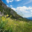 Stock Photo: Summer meadow in sunny weather