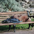 The sleeping vagabond on a bench — Stock Photo