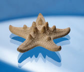Starfish on a blue background — Stock Photo
