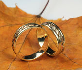 Wedding rings on autumn sheet — Stockfoto
