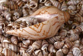 Seashells frame. Good for background. — Stock Photo