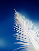 White feather — Stock Photo