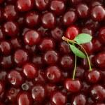 Red Cherries background — Stock Photo #2734634