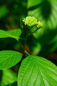 Green Plant/Foliage — Foto Stock