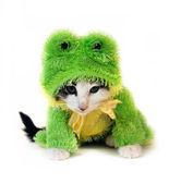 青蛙小猫 — 图库照片